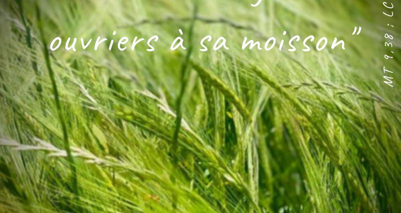 Photo de champs de blé avec la prière des Moisson